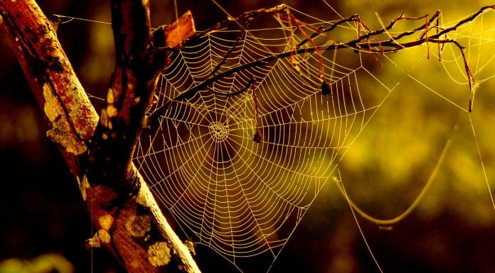 Seasonal web design