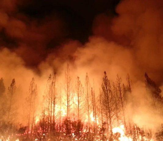 Wildfire image